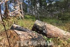 政府与各地方全国视频会议:需为森林保护与发展工作推出特殊支持政策