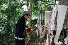安沛省文安县纳侯乡蒙族人的森林祭祀仪式