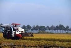 越南召开有关粮食食品系统的第一次国家对话会