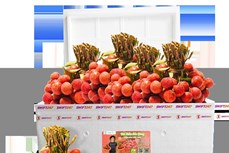 越捷携手加大荔枝在国内外市场的出口与销售力度