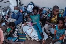 越南呼吁国际社会采取行动避免埃塞俄比亚陷入饥饿