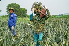 今年前6个月越南农产品出口额达240亿美元