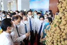 中国驻越南大使馆经济商务参赞:愿充当桥梁和纽带 助推兴安省龙眼及其他农产品销售