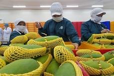 2021年越南果蔬出口额有望突破40亿美元大关