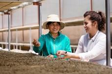 King Coffee公布农产品供应商对接项目