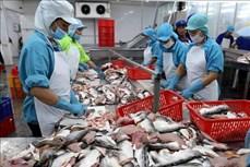 2021年前7个月越南查鱼出口总额达9.3亿美元