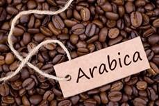 越南阿拉比卡咖啡豆出口价格暴涨
