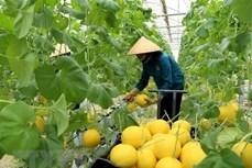 澳大利亚和越南在发展高科技农业方面的合作机会较多