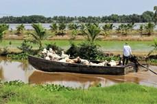金瓯省沿海无河口沙地乡的新农村建设成效显著
