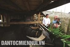 Trạm Tấu với công tác di dân vùng lũ