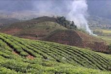 Lai Châu: Triển khai các chính sách hỗ trợ phát triển nông nghiệp, nông thôn