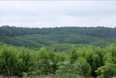 Đắk Nông: Trồng cây ngắn ngày thay thế rừng phòng hộ, đặc dụng