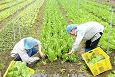 Phê duyệt Đề án phát triển nông nghiệp hữu cơ
