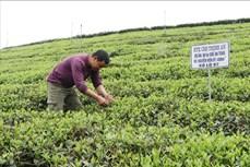 Thái Nguyên: Phát triển 6 sản phẩm nông nghiệp chủ lực