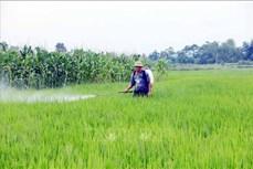 Tuyên Quang: Tập trung diệt trừ sâu bệnh hại lúa Mùa