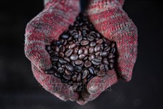 Xưởng chế biến cà phê lâu đời nhất ở Malaysia