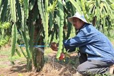 Đào ao tích trữ kết hợp tưới tiết kiệm – Giửi pháp ứng phó với hạn hán ở Bình Thuận