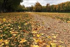 Cảnh đẹp mùa thu ở châu Âu