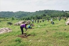 Ninh Thuận phát triển rừng gắn với cải thiện sinh kế cho người dân