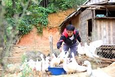 Đông Giang hỗ trợ thanh niên khởi nghiệp