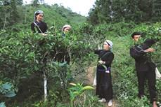 Phát triển kinh tế nông nghiệp ở huyện vùng cao Bắc Hà