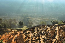 Chợ trâu Cán Cấu (Lào Cai)