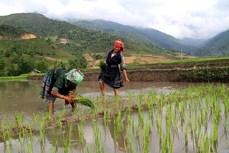 Trạm Tấu tích cực chuyển đổi cơ cấu cây trồng