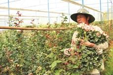 Làng hoa truyền thống Vạn Thành