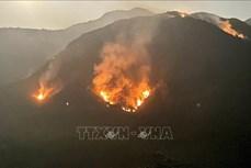 Huy động gần 1.000 người chữa cháy rừng ở huyện Tam Đường-Lai Châu