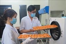 Kon Tum: Nâng cao giá trị kinh tế từ nuôi cấy đông trùng hạ thảo