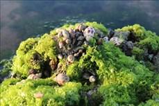 Cánh đồng rong biển - điểm du lịch khám phá ở Ninh Thuận