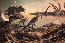 Phát hiện hóa thạch động vật có vú niên đại 72 triệu năm trước đây tại Chile