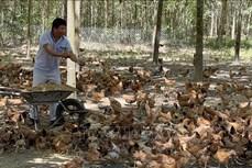 Anh Nguyễn Đăng Vương với mô hình sản xuất sạch vì sức khỏe cộng đồng