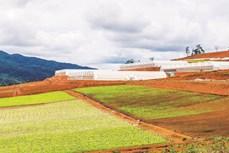 Thúc đẩy phát triển vùng kinh tế động lực Kon Plông