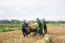 Bão số 5: Hà Tĩnh kêu gọi tàu, thuyền vào tránh trú bão; giúp nông dân thu hoạch lúa Hè Thu