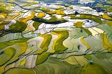 Bức tranh thiên nhiên ở huyện Mù Cang Chải