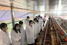 """Độc đáo mô hình """"Trại gà đẻ trứng"""" ở trường nội trú vùng cao Hà Giang"""