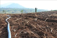 Các huyện miền núi tỉnh Phú Yên đối phó với hạn