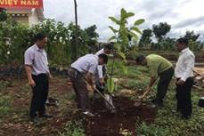 Gia Lai phát động trồng rừng năm 2020