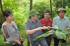 Lễ ra mắt Chi hội Nông dân nghề nghiệp đầu tiên tại Yên Bái