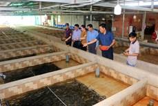 Thanh niên khởi nghiệp và tạo bước đột phá cho nghề nuôi lươn giống sinh sản bán nhân tạo
