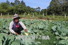 Trà Vinh giảm hơn 4.000 hộ nghèo