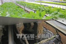 Bước đột phá sản xuất nông nghiệp công nghệ cao Đà Lạt
