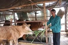 Liên kết phát triển chăn nuôi tập trung theo hướng an toàn sinh học ở Trà Vinh