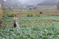 Sơn La nhân rộng các ứng dụng công nghệ trong phát triển cây trồng