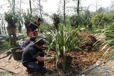Thanh niên vùng biên giới Lai Châu vượt khó khởi nghiệp