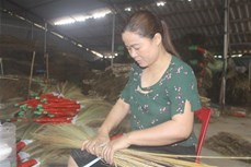 Chị Hoàng Thị Hưng làm giàu từ sản xuất chổi đót