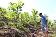 Lợi ích kép từ việc trồng rừng tại Hà Giang