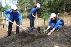 Thủ tướng Chính phủ chỉ thị về chương trình trồng 1 tỷ cây xanh và bảo vệ, phát triển rừng