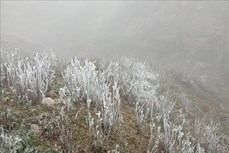 Đỉnh đèo Khau Phạ ở Yên Bái xuất hiện băng giá